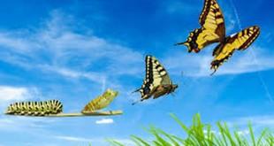 farfalla cambiamento