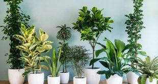 le piante da tenere in camera da letto per favorire il sonno - zoomma - Piante Per Camera Da Letto