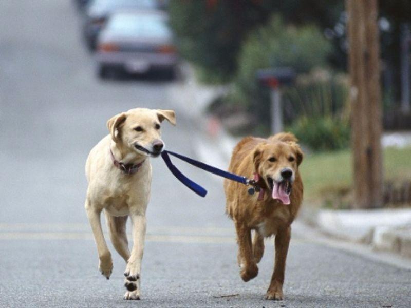 obbligo di soccorso di animali in caso di incidente