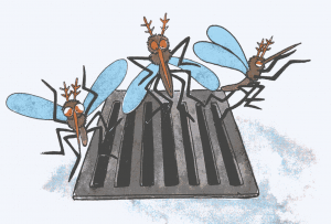 Lotta alla zanzara tigre