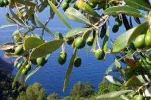 salute e passione mediterranei